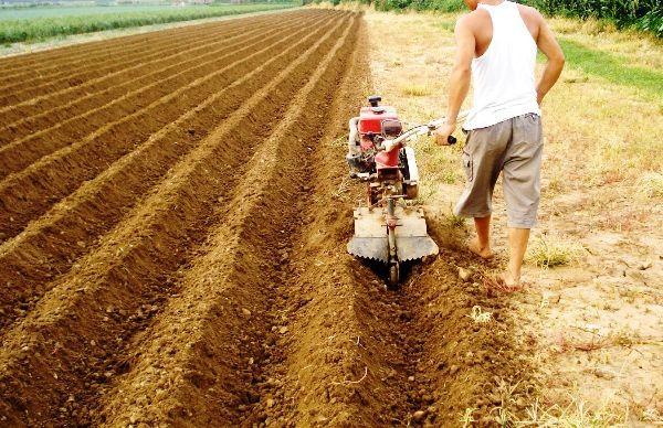 Какая почва нравится картофелю