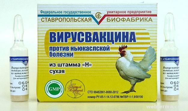 Сроки прививки вакцины от ньюкасла птицы