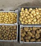 При какой температуре должна храниться картошка