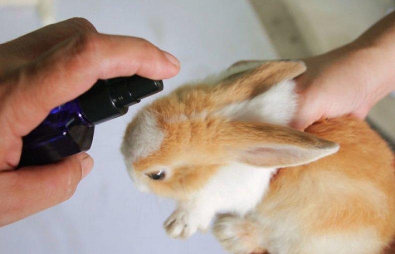 Болезни у кроликов бывают какие ушей по неумывакина методу цистита лечение