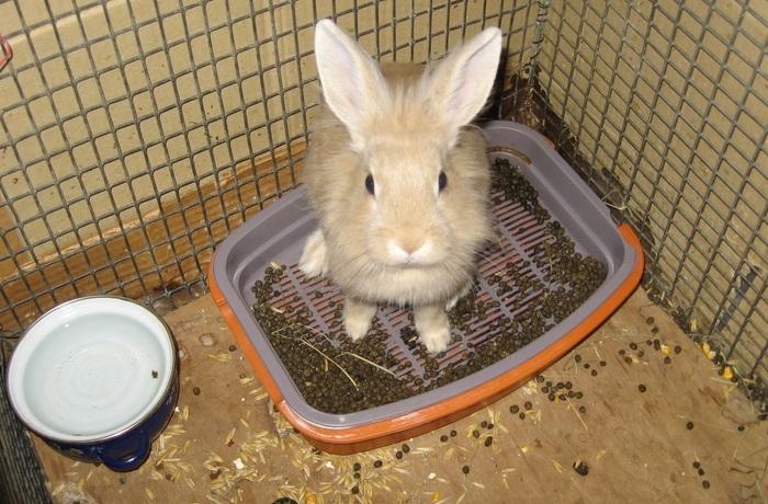 Понос у кроликов — причины, лечение и профилактика