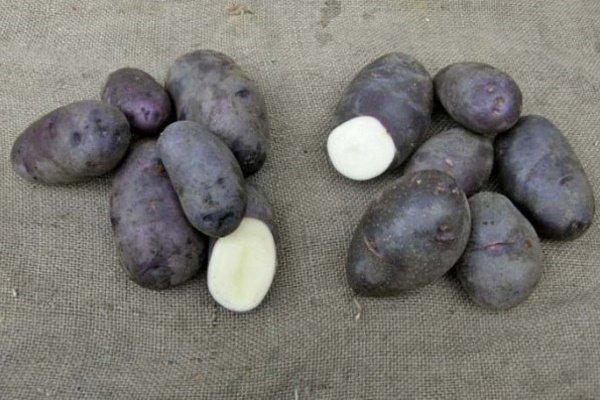 Картошка сказка описание сорта
