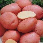 Парша клубней картофеля