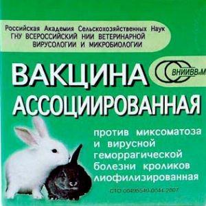 Вакцинация кроликов в домашних условиях для начинающих, видео и фото