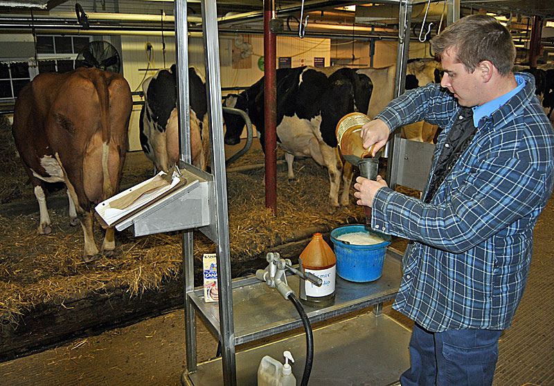Лечение мастита у коров: причины, симптомы, лечение