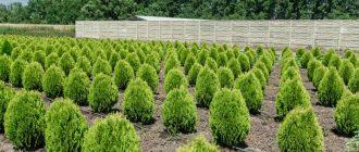 питомники растений что это такое